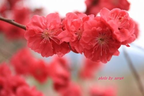 ブログNo.594(大どんでん返し)23