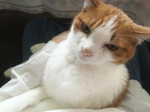 ブログNo.591(布団を畳まれた後の猫)8