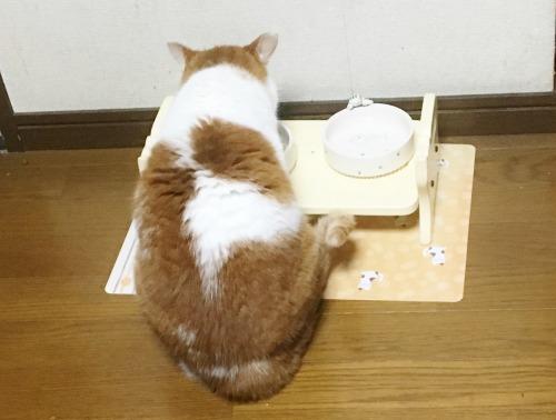 ブログNo.595(にゃ!にゃにしてるんでしゅかぁ~)11