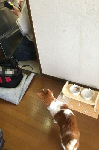 ブログNo.596(どうしてこんな所にどんぐりが?)8