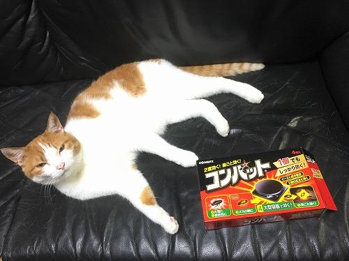 ブログNo.644(ゴキブリ感知猫)4