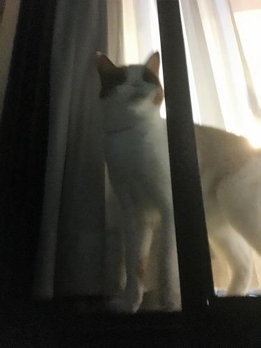 ブログNo.731(十五夜の猫の行動)3
