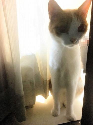 ブログNo.731(十五夜の猫の行動)4