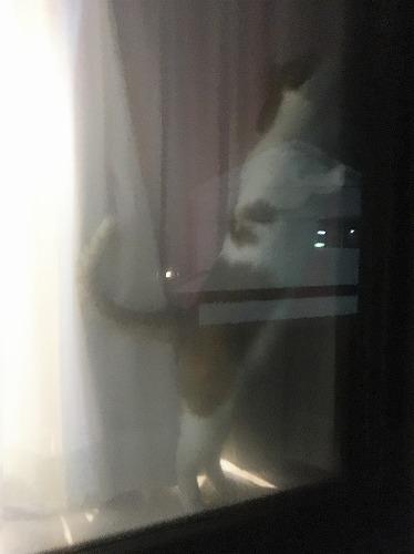 ブログNo.731(十五夜の猫の行動)10