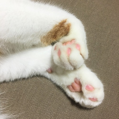 ブログNo.752簡単(茶トラ猫と茶白猫)7