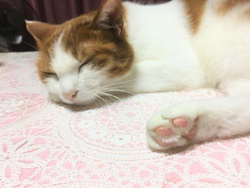 ブログNo.751(猫にお札)1