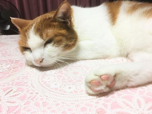 ブログNo.751(猫にお札)2