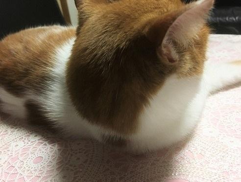 ブログNo.751(猫にお札)6
