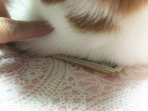 ブログNo.751(猫にお札)7