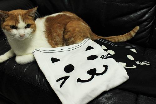 ブログNo.749(猫のTシャツを着せたら潰れた)3