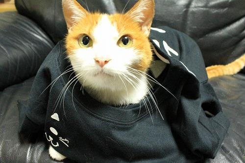 ブログNo.749(猫のTシャツを着せたら潰れた)4