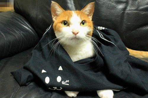 ブログNo.749(猫のTシャツを着せたら潰れた)5