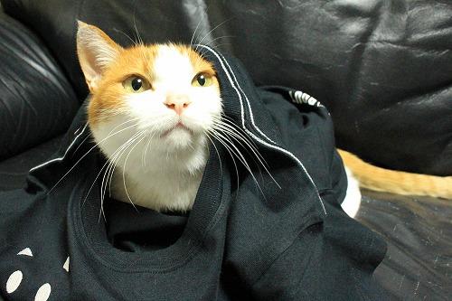 ブログNo.749(猫のTシャツを着せたら潰れた)6