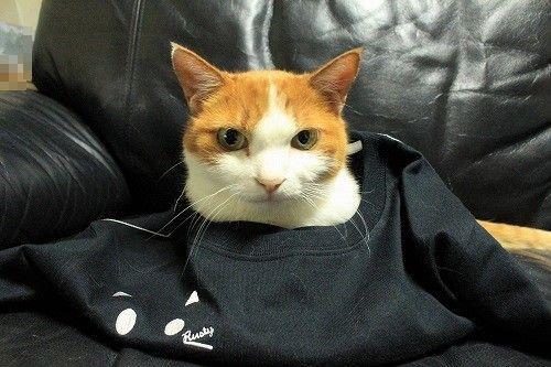 ブログNo.749(猫のTシャツを着せたら潰れた)16