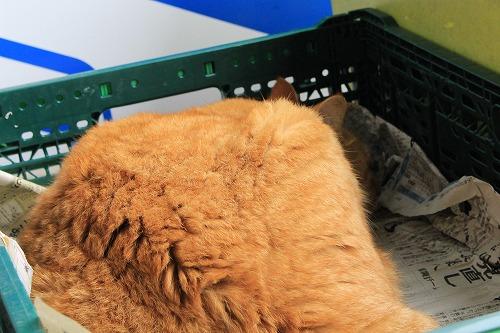 ブログNo.752簡単(茶トラ猫と茶白猫)追加