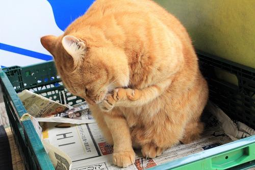 ブログNo.752簡単(茶トラ猫と茶白猫)2