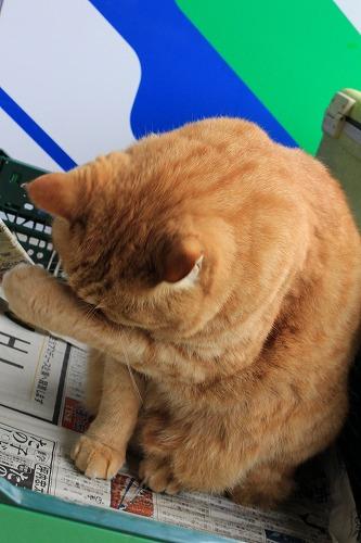 ブログNo.752簡単(茶トラ猫と茶白猫)3