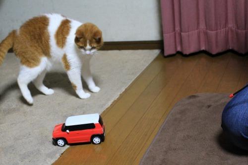 ブログNo.585(初めて動く物を見た時の猫の反応)2