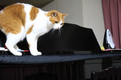 ブログNo.585(初めて動く物を見た時の猫の反応)3