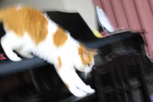 ブログNo.585(初めて動く物を見た時の猫の反応)4