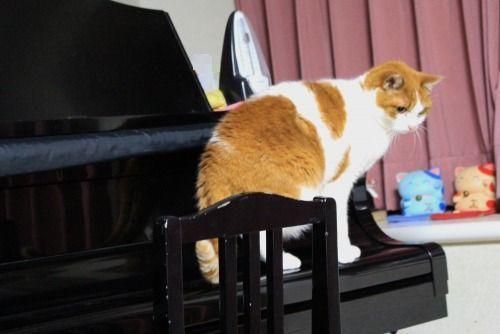 ブログNo.585(初めて動く物を見た時の猫の反応)5
