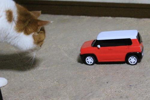 ブログNo.585(初めて動く物を見た時の猫の反応)6