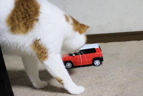 ブログNo.585(初めて動く物を見た時の猫の反応)7