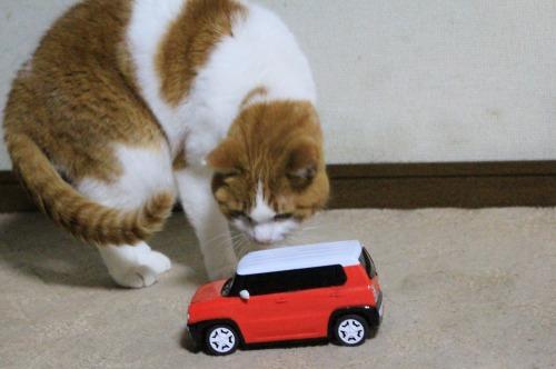 ブログNo.585(初めて動く物を見た時の猫の反応)9