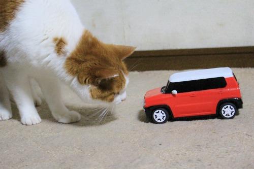 ブログNo.585(初めて動く物を見た時の猫の反応)10