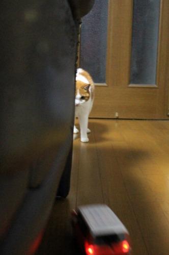 ブログNo.585(初めて動く物を見た時の猫の反応)11