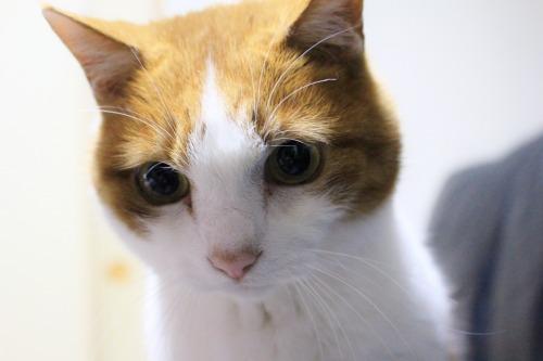 ブログNo.585(初めて動く物を見た時の猫の反応)12