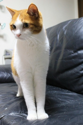ブログNo.585(初めて動く物を見た時の猫の反応)13