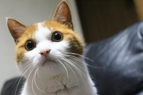 ブログNo.585(初めて動く物を見た時の猫の反応)1