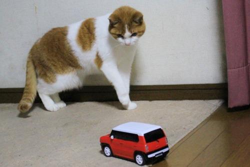 ブログNo.585(初めて動く物を見た時の猫の反応)14