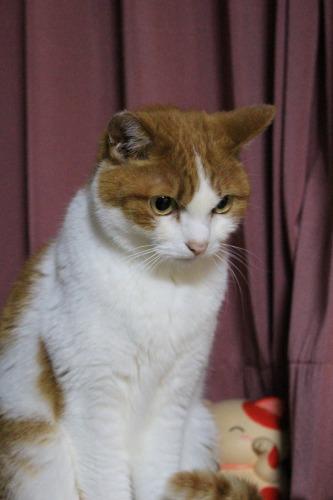 ブログNo.585(初めて動く物を見た時の猫の反応)15