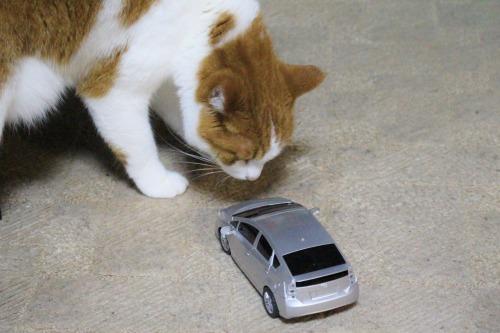 ブログNo.585(初めて動く物を見た時の猫の反応)16