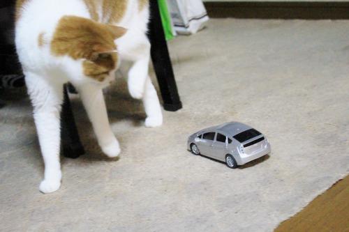 ブログNo.585(初めて動く物を見た時の猫の反応)17