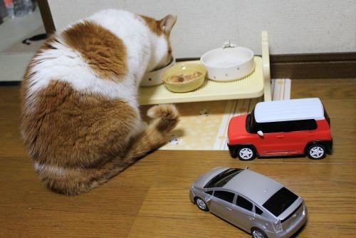 ブログNo.585(初めて動く物を見た時の猫の反応)19