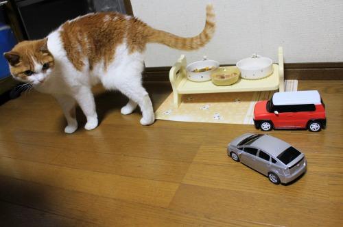 ブログNo.585(初めて動く物を見た時の猫の反応)20