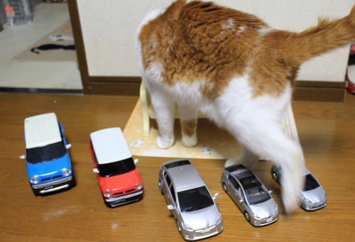 ブログNo.585(初めて動く物を見た時の猫の反応)21