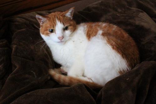 ブログNo.587(上半身だけで遊ぶ猫)1