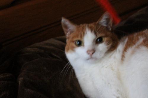 ブログNo.587(上半身だけで遊ぶ猫)3