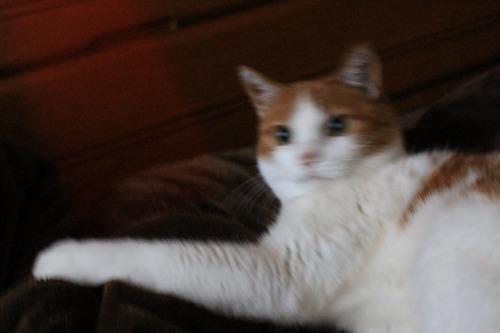ブログNo.587(上半身だけで遊ぶ猫)4
