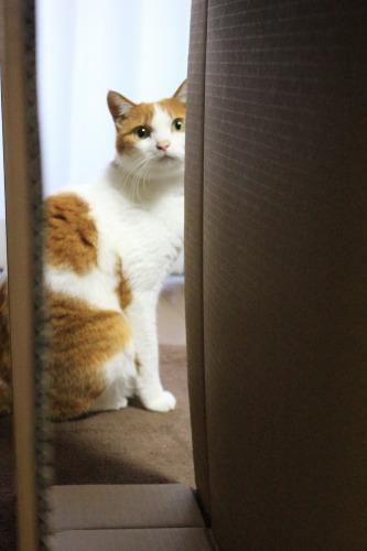 ブログNo.599(首をかしげる猫)1