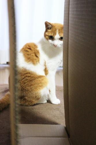 ブログNo.599(首をかしげる猫)2