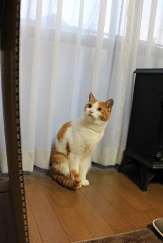 ブログNo.599(首をかしげる猫)9