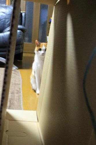 ブログNo.599(首をかしげる猫)10
