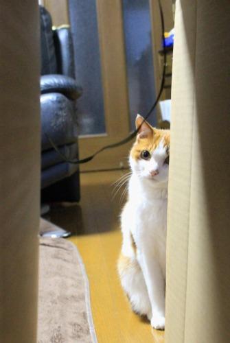 ブログNo.599(首をかしげる猫)11