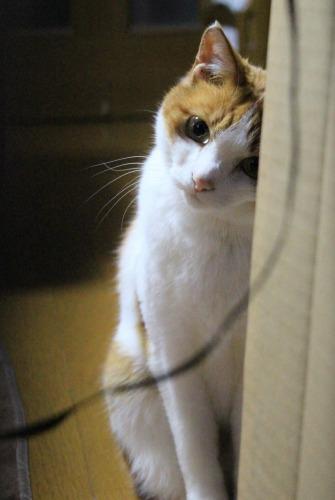 ブログNo.599(首をかしげる猫)12