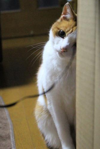 ブログNo.599(首をかしげる猫)13